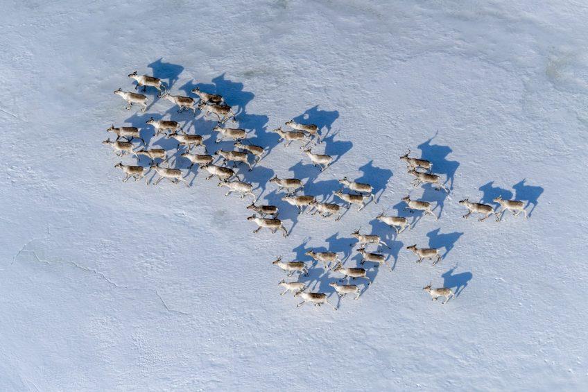 Начало миграции Сергей Горшков Wildlife photographer of the year